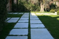 cedre gray pose sur herbe